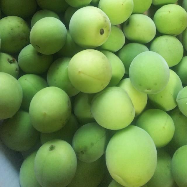 青梅 完全無農薬 3キロ 食品/飲料/酒の食品(フルーツ)の商品写真