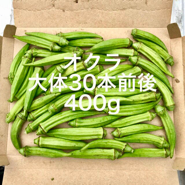 鹿児島産オクラ箱込み400g 食品/飲料/酒の食品(野菜)の商品写真
