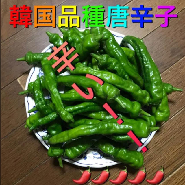 青唐辛子   韓国品種   愛知県産 食品/飲料/酒の食品(野菜)の商品写真