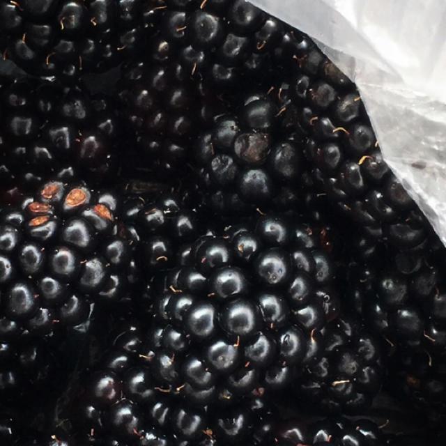 ゆみな様専用 ブラックベリー ポリフェノールたっぷり フルーツ苗 新芽 食品/飲料/酒の食品(フルーツ)の商品写真