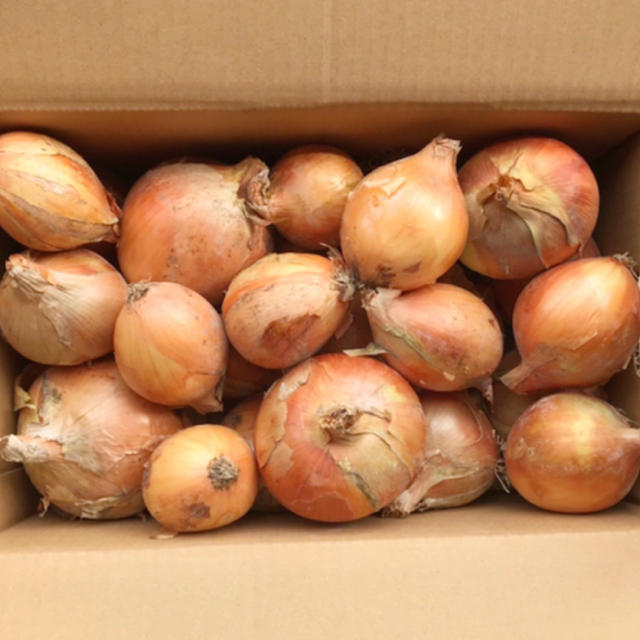 [訳あり10kg]淡路島 玉ねぎ もみじ 箱ギッシリ 食品/飲料/酒の食品(野菜)の商品写真