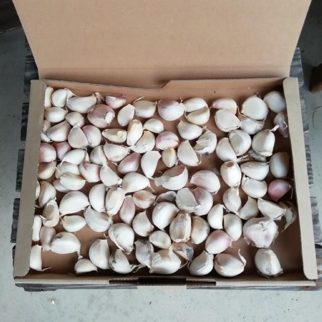 ニンニク『500g』バラ売り 食品/飲料/酒の食品(野菜)の商品写真
