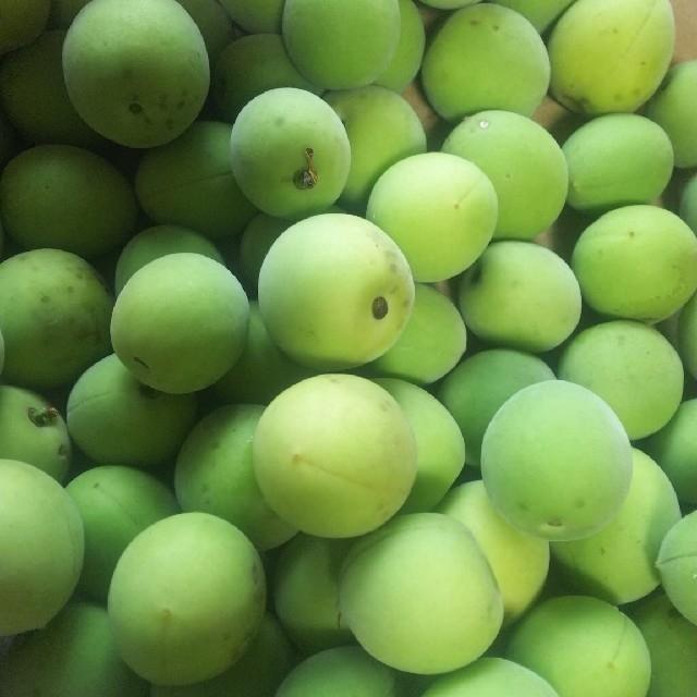 mii様用  青梅 無農薬 3キロ  食品/飲料/酒の食品(フルーツ)の商品写真