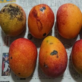 14 マンゴー 3kg 家庭用 黒点あり(フルーツ)