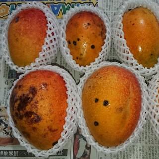 15 マンゴー 3kg 家庭用 黒点あり(フルーツ)