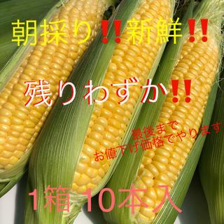 朝採り‼️産地直送‼️とうもろこし 10本入(L〜3L)(野菜)