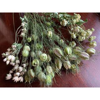 ドライフラワー花材 色々 グリーンセット(ドライフラワー)