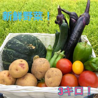 夏野菜詰め合わせセット! 3キロ(野菜)