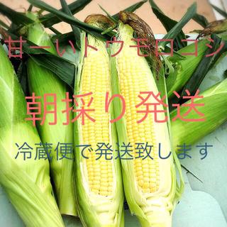 千葉県産甘ーいトウモロコシ18.19日収穫発送分