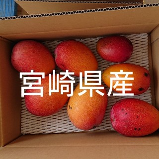 家庭用(訳あり) 完熟マンゴー 3キロ段ボール