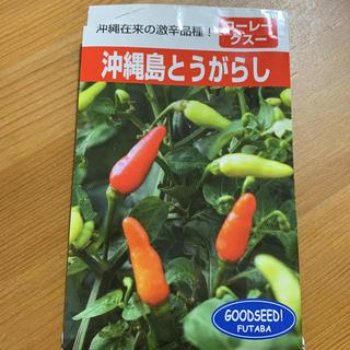 沖縄島とうがらし 種 おまけ付き バラ売り アフリカンマリーゴールド(野菜)