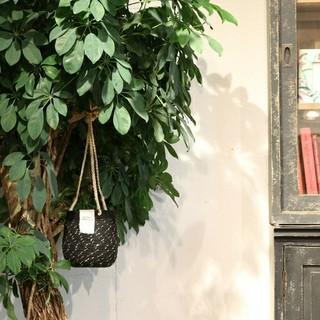 アメリヴィンテージ(Ameri VINTAGE)の2019 新作完売品 Ameri VINTAGE サスペンダーパンツ(サロペット/オーバーオール)