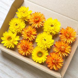 花材セット ドライフラワー ヘリクリサム 黄色&オレンジ 12個 ハーバリウムに(ドライフラワー)