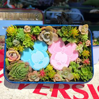 多肉植物 寄せ植え ✨そのまま飾れます✨#KISS 899→799円(その他)