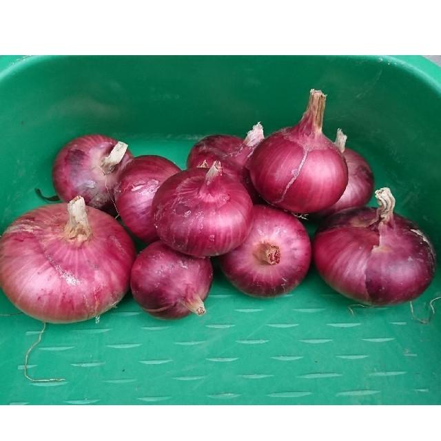 赤たまねぎ 1.8キログラム 品種「猩々赤」 食品/飲料/酒の食品(野菜)の商品写真