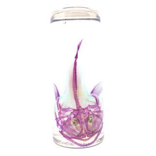 透明標本 アンコウ(置物)