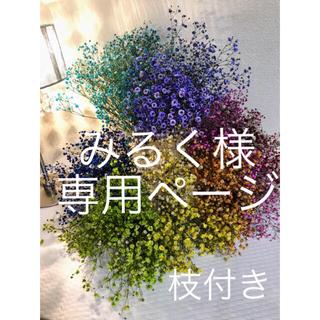 ドライフラワー かすみ草 ❣️浴衣などに ❣️(ドライフラワー)