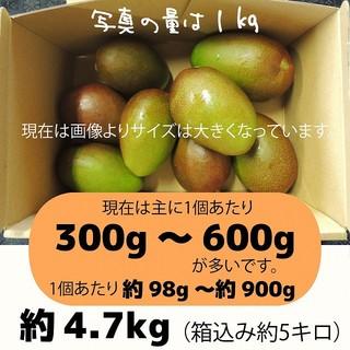 [橙5-10]約4.7キロ グリーンマンゴー 青マンゴー 摘果マンゴー 加工用(フルーツ)