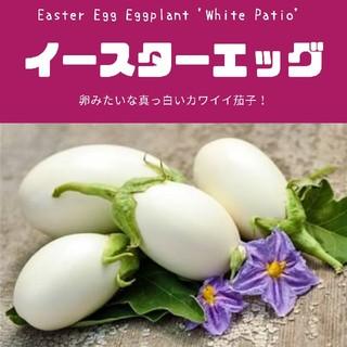 ナス【イースターエッグ】種子20粒(その他)