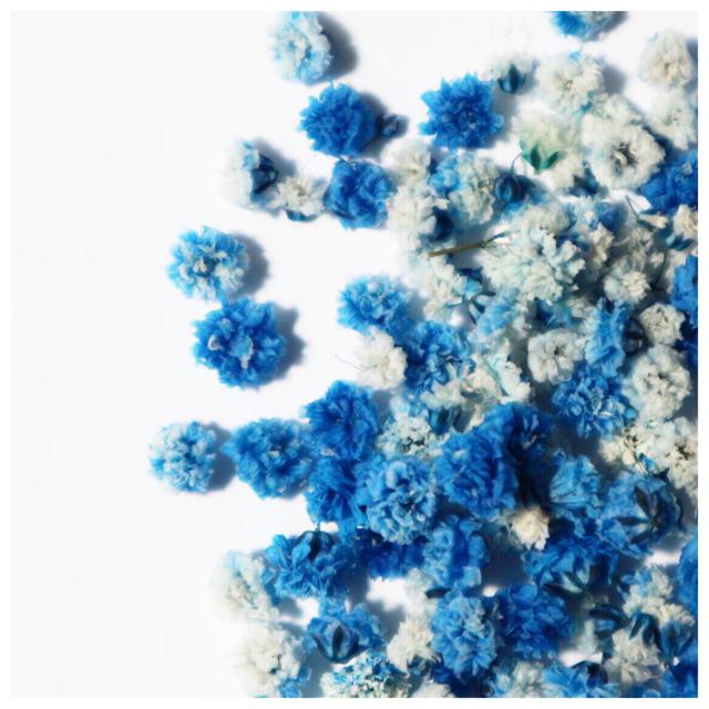 《60個!!》かすみ草 ドライフラワー ハンドメイドのフラワー/ガーデン(ドライフラワー)の商品写真