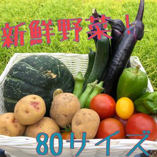 産地直送! 夏野菜の詰め合わせ 80サイズ(野菜)
