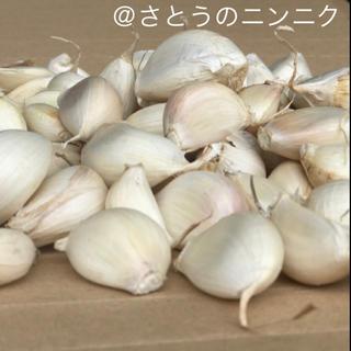 【専門農家直送】にんにくバラ 900g  サイズ混載 (野菜)
