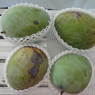 27 キーツマンゴー 2.7kg 家庭用 黒点あり(フルーツ)