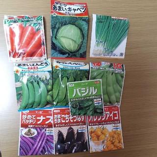 野菜の種 10種セット(野菜)