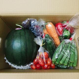 特別お楽しみセット 熊本県産 黒小玉すいか&野菜セット 送料込み ①(野菜)