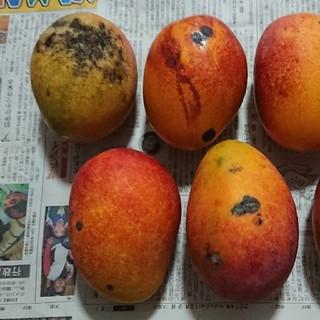 専用マンゴー 2kg(フルーツ)
