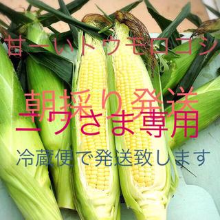 甘ーい朝採りトウモロコシ(野菜)