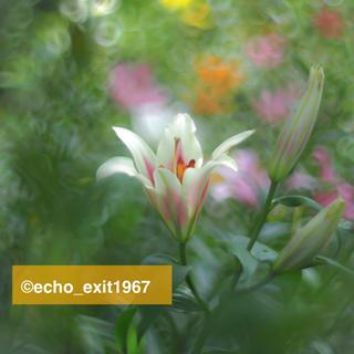 ペンタックス(PENTAX)の◆宝石の色選べます 宝石レンズ SMC Takumar 55mm f1.8(レンズ(単焦点))