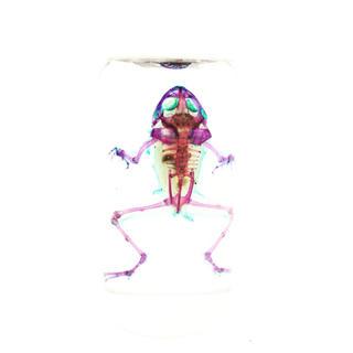 アジアウキガエル(置物)