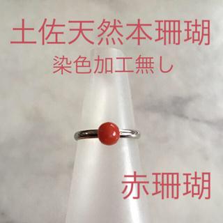 土佐天然赤本珊瑚・シンプル リング*うぶだし*血赤〜赤珊瑚*新品台(リング(指輪))