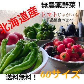 【北海道産】無農薬野菜詰め合わせセット(野菜)