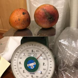 レッドキーツマンゴー 2キロ(フルーツ)
