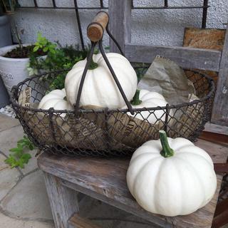 白かぼちゃ  1個(野菜)