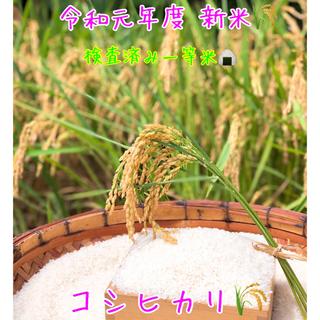 令和元年度 新米コシヒカリ 10キロ ミルキークイン10キロ(米/穀物)