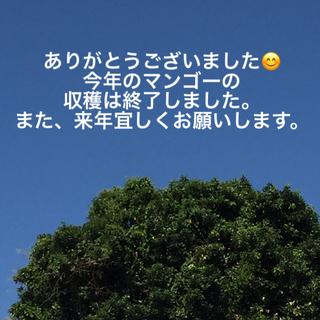 M005 沖縄県産 訳あり小振りマンゴー 2kg(フルーツ)