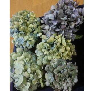 アジサイ ドライフラワー 青黄緑~薄紫~緑紫 5(ドライフラワー)