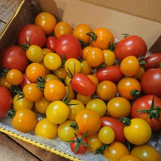お買い得‼︎中玉フルーツトマトフルティカ&カラフルミニトマト詰め合わせ(野菜)