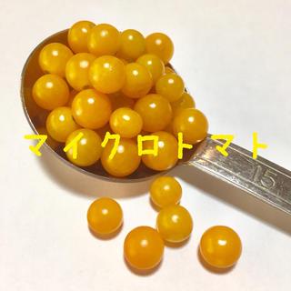 マイクロトマト イエロートパーズ  種(その他)