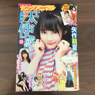 ハクセンシャ(白泉社)のヤングアニマル No.13 矢作萌夏 クリアファイル付(漫画雑誌)