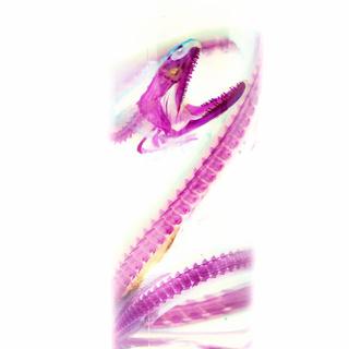 透明標本 ホシキカイウツボ オオグソクムシ(置物)