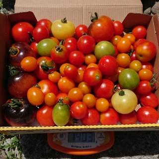 農薬化学肥料不使用♪トマト詰め合わせセット♪(野菜)