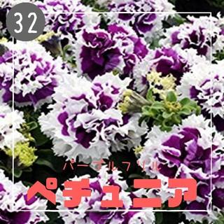 【ペチュニア㉜】パープルフリル 種子30粒  (その他)
