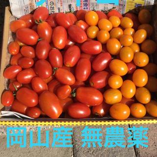 ミニトマト アイコ【コンパクト便】(野菜)