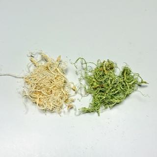 カーリーモスの白とグリーンを小分けセット(その他)