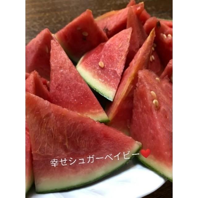 シュガーベイビーの種 食品/飲料/酒の食品(フルーツ)の商品写真