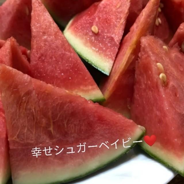 シュガーベイビーの種 食品/飲料/酒の食品(野菜)の商品写真